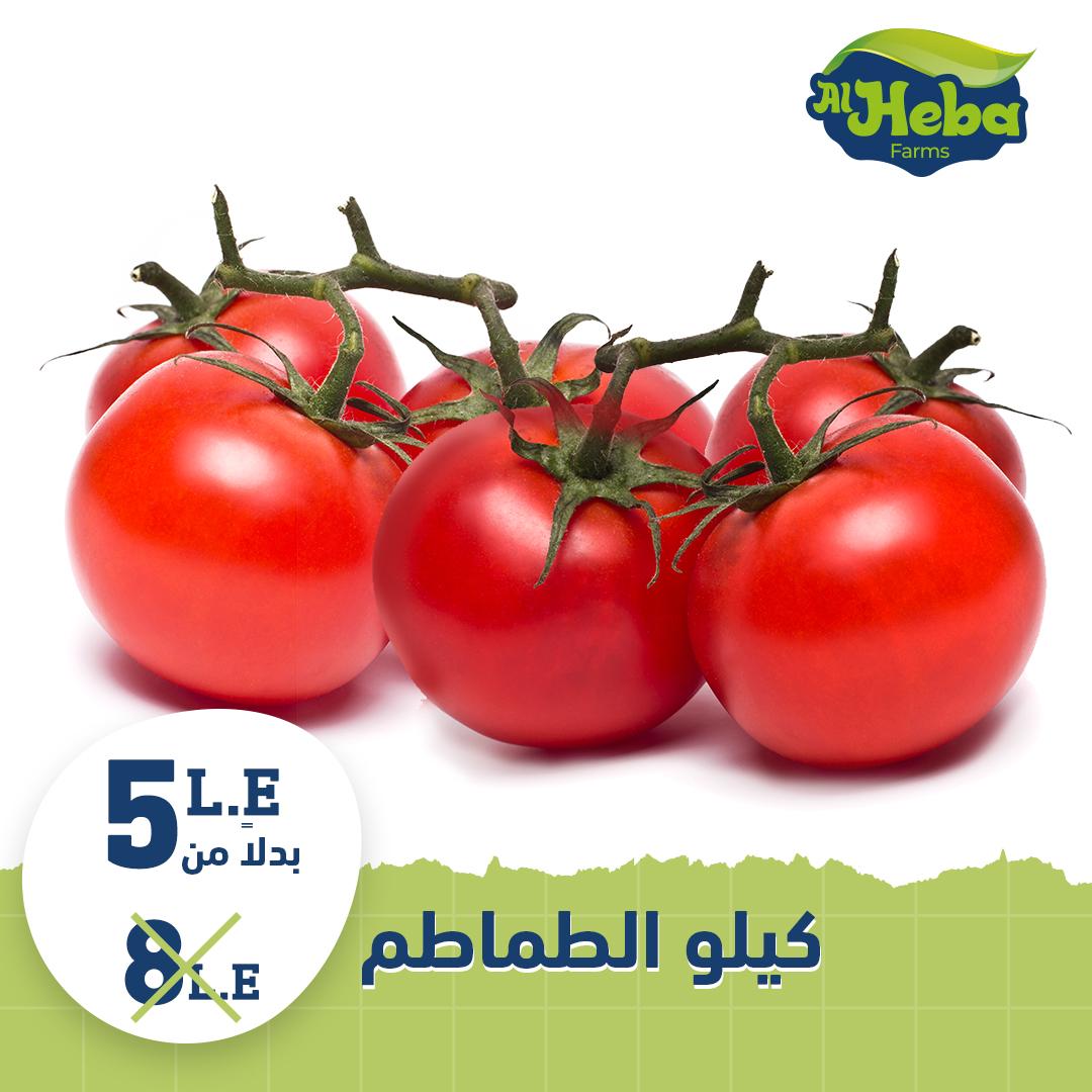 مزارع الهبة طماطم